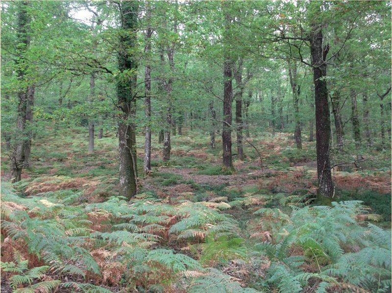 Woodland After Wood Management