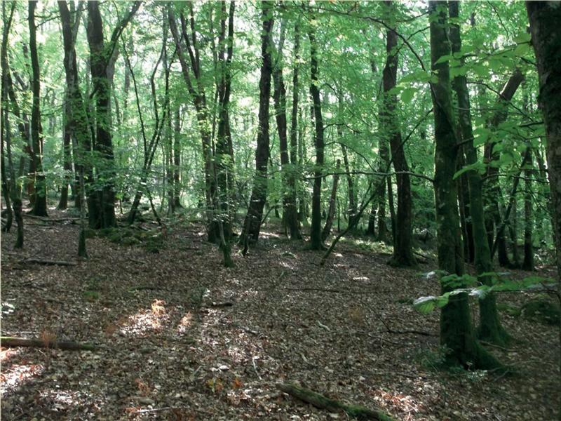 Woodland Before Wood Management